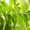 The Wonder Leaf-NEEM